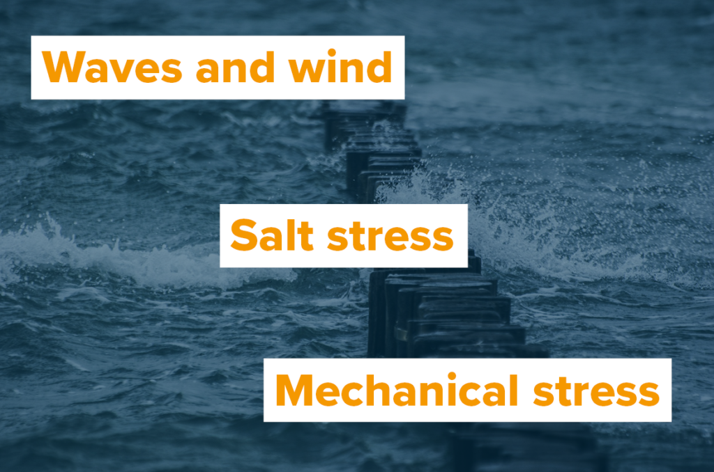 Infograph: Waves and wind, salt stress, mechanical stess
